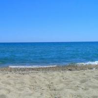Dauphins sur la plage
